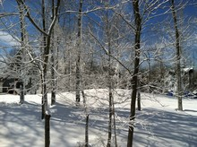 Trees In Winter With Snow
