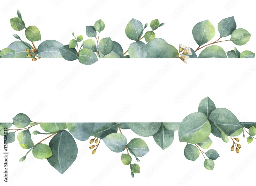 Fototapeta Watercolor green floral card with silver dollar eucalyptus leaves and branches isolated on white background.