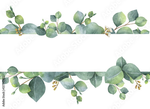 Poster Fleuriste Watercolor green floral card with silver dollar eucalyptus leaves and branches isolated on white background.
