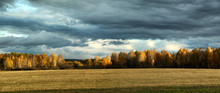Storm Clouds Over A Birch Grove And Field In Autumn