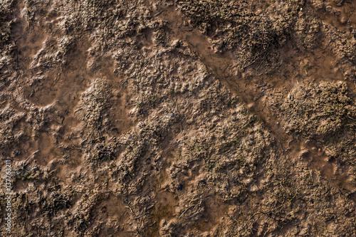 Cuadros en Lienzo  mud