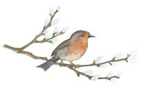 Bird On Willow Tree. Hand Drawn Illustrations
