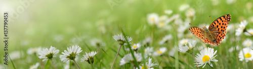 Foto op Canvas Pistache Blumen 693