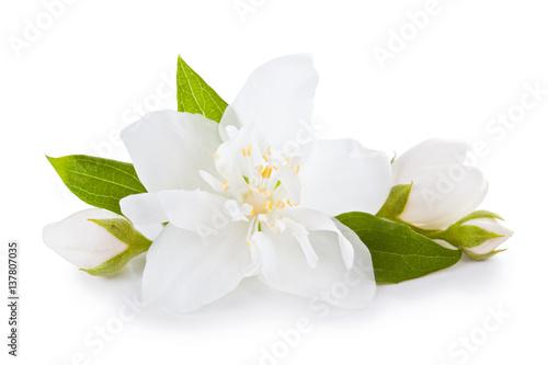 Fotografie, Obraz  Jasmine flowers with leaves.