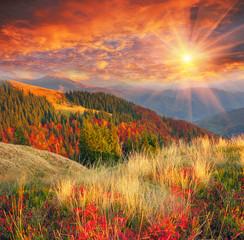 Fototapeta Jesień golden autumn