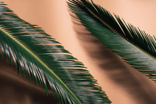 Close-up Of Two Palm Leaves On A Bright Orange Background