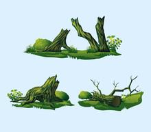 Broken Trees, Stumps.