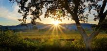 Napa Sunset