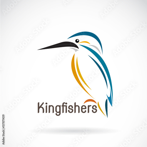 Photo Vector of a kingfishers (Alcedo atthis) on white background