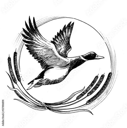 Flying duck Wall mural