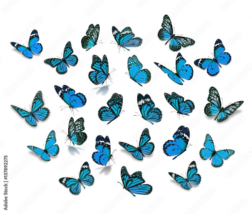 Big set Monarch Butterfly
