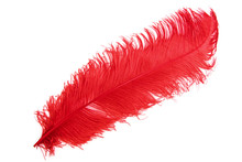 The Ostrich's Red Feather On A...