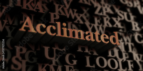 Acclimated - Wooden 3D rendered letters/message Wallpaper Mural