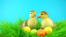 Two Funny Fluffy Easter Duckli...