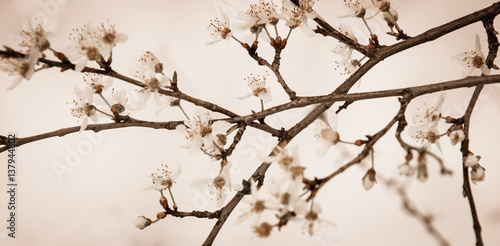 Photo  Sudden winter in spring