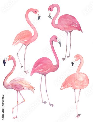 Canvas Prints Flamingo Bird Set watercolor random flamingos