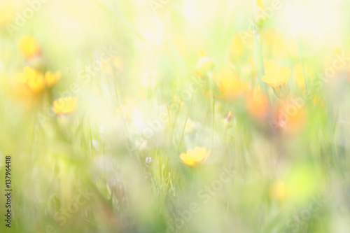 Fotobehang Natuur abstract dreamy photo of spring wildflowers