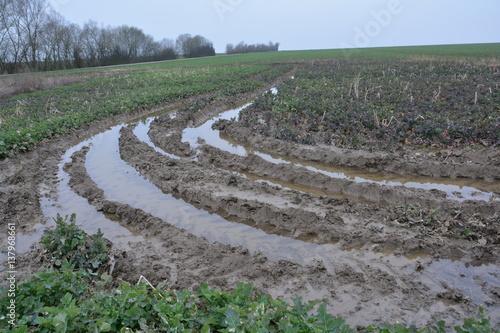 Photo Excès d'eau : ornières et asphyxie racinaire d'une colza