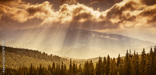 Photo  Majestic pine tree forest at autumn mountain valley