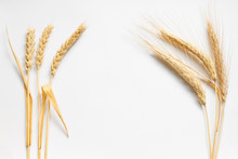 Wheat And Rye Composition On White Cardboard, Close Up
