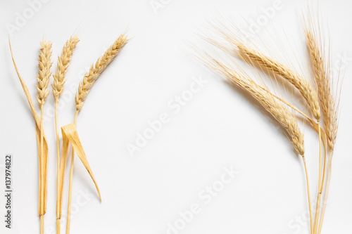 Fotografia  Wheat and rye composition on white cardboard, close up