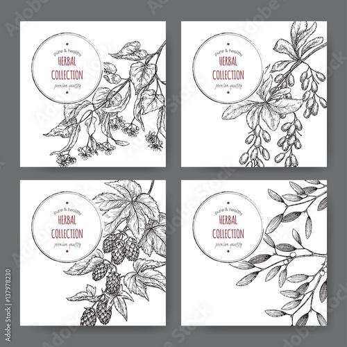 Αφίσα  Four vector labels with lime tree, barberry, mistletoe, hop sketch