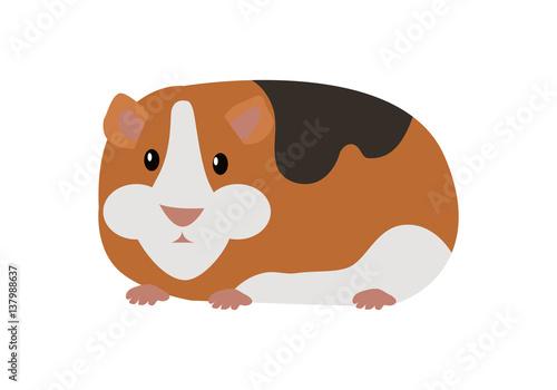 Fotografía  Guinea Pig Cavia Porcellus Isolated Cartoon Animal