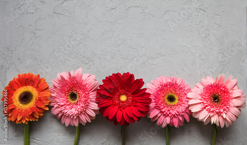 Fotobehang Gerbera Spring flowers Gerbera on the table of the cement concrete texture. March 8 concept. design pattern