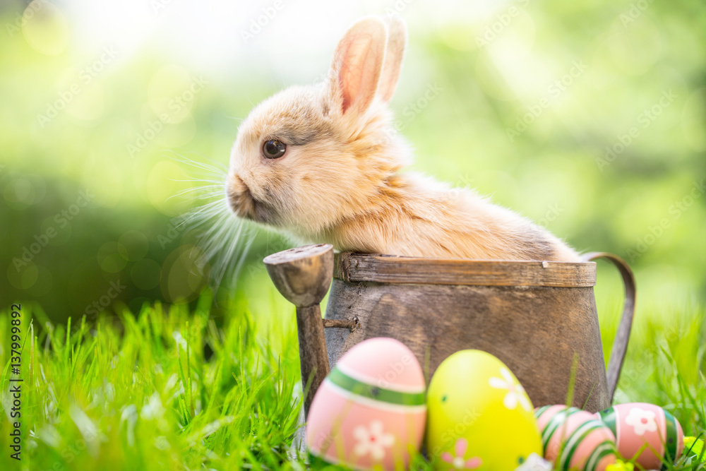 Kaninchen Baby Osterhase Karte Frühling Natur