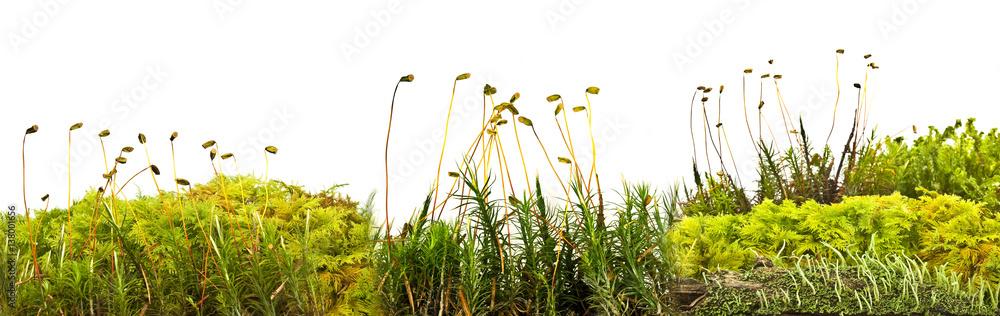 Fototapeta moos and lichen