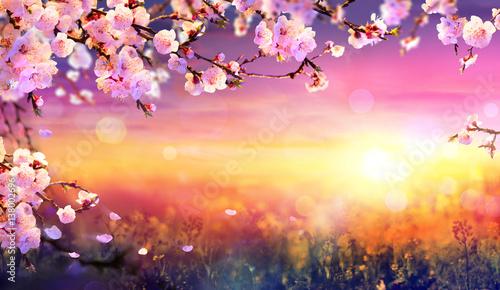 Keuken foto achterwand Oranje eclat Spring Art Background - Pink Blossom At Sunset