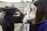 Fototapeta Zwierzęta - Girl in donkey farm