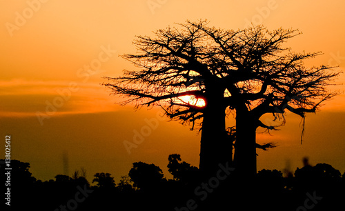 In de dag Baobab sunset baobab Africa