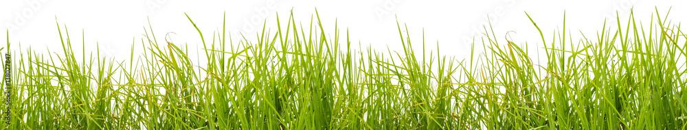 Fototapeta  brins d'herbe, fond blanc