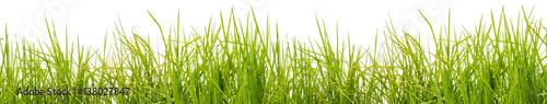 Fototapeta  brins d'herbe, fond blanc  obraz
