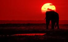 Elephant Sun Africa
