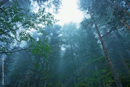 Foto auf Acrylglas Wald im Nebel Fantasy foggy forest