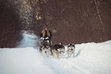 Siberian Dog Pulling Sleigh Carrying Woman