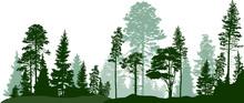 High Green Pines In Fir Trees ...