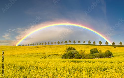 Poster Melon rainbow over the cultivated field