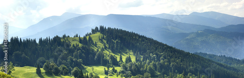 Poster Heuvel Panorama of fresh green hills in Carpathian mountains in spring sunny day