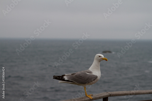 Poster Nature cheeky seagull