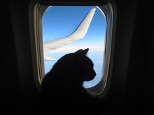 Aviation Cat Flying In An Airp...