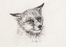 Fox Portrait, Pencil Drawing O...