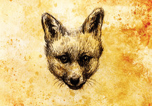 Fox Portrait, Pencil Drawing On Paper And Vintage Effect.