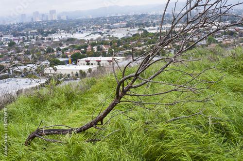 Foto op Aluminium Khaki Baldwin Hills Scenic Overlook