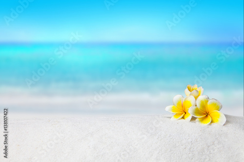 Poster Frangipani pagoda, plumeria on sandy beach, Summer concept