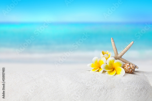 Poster Frangipani pagoda, plumeria,Shells on sandy beach, Summer concept