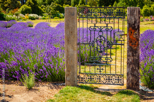 Photo  Garden with colorful lavender field and rustic vintage gate