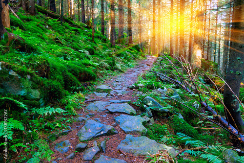 Aluminium Prints Road in forest pathway in green forest
